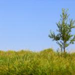 Jeune arbre isolé © Travkina