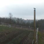 Installation d'un poteau perchoir de 2m40 de hauteur pour que les rapaces puissent s'y poser et chasser les campagnols