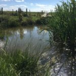 Mare créée en 2014. En moins d'1 an, une superbe végétation s'y est développée, accompagnée de grenouilles et de libellules.