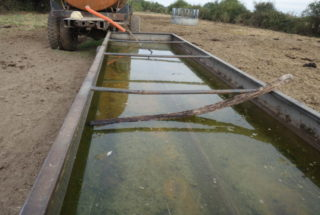 Abreuvoir avec 2 branches posées à l'intérieur suite à la découverte d'une Pie-Grièche écorcheur retrouvée noyée © Régis Ouvrard - LPO