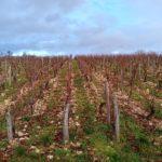 Domaine viticole visité © LPO Yonne