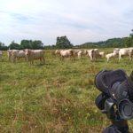 Prairies pâturées © S.Dujardin - LPO Yonne