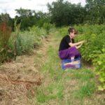 Récolte des groseilles @ Potager des Rainettes
