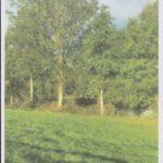 Aulnes et fresnes bordant la rivière Le Sulon et l'étang © EARL du Sulon