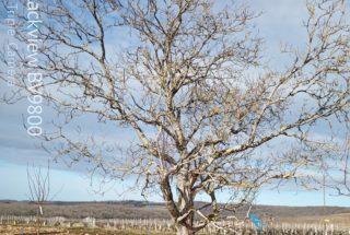 Arbre conservé sur la parcelle © S.Dujardin - LPO Yonne