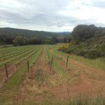Parcelle viticole du Domaine Beauregard © Florian Escot LPO Aude